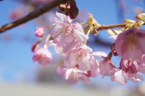 イベントDSC01213-009花