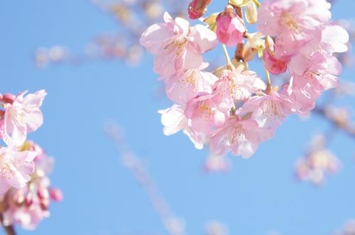イベントDSC01216-011花