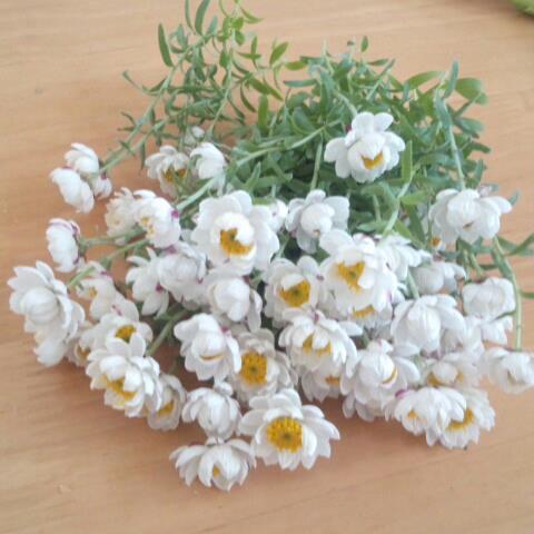 花かんざし