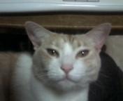 うちの白虎さん