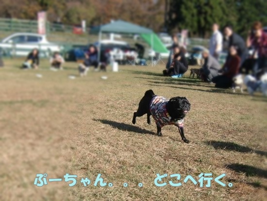 CIMG3248.jpg