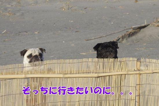 _IGP3267.jpg