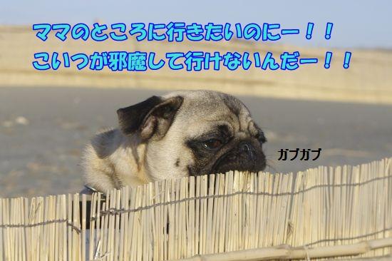 _IGP3285.jpg