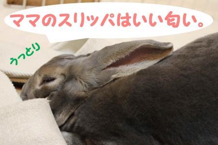 120116-1_convert_20120116001945.jpg