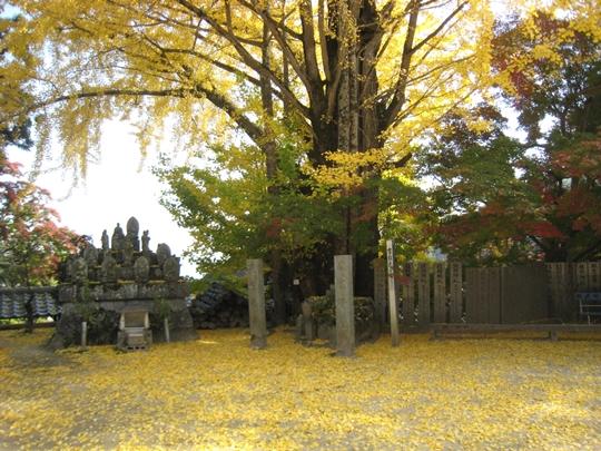 大窪寺のイチョウ