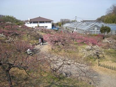 香川県園芸総合センター梅