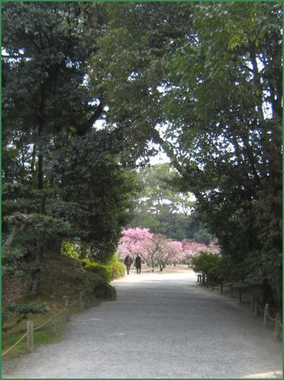 栗林公園梅 クリック拡大