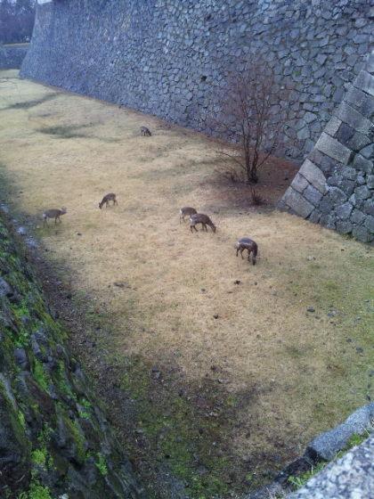 名古屋城に鹿が?!