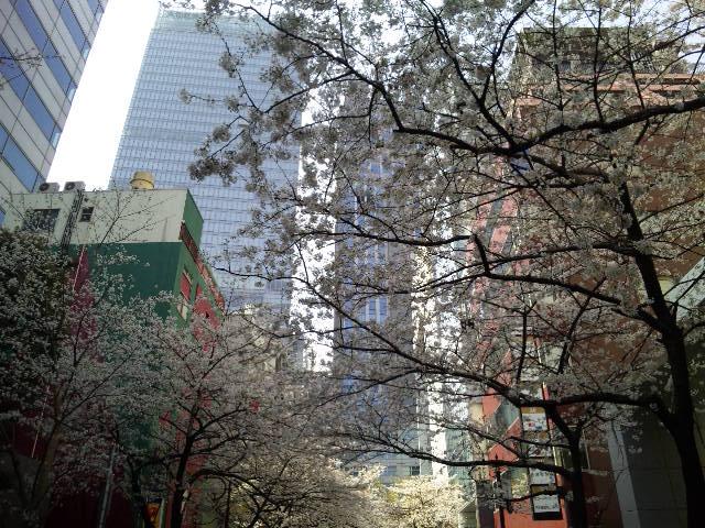 八重洲通りの桜☆