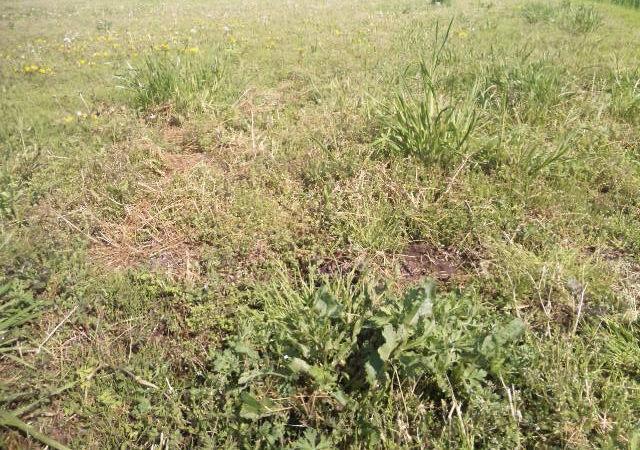 とある芝生