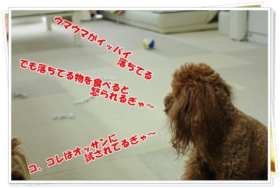 DSC_8518.jpg