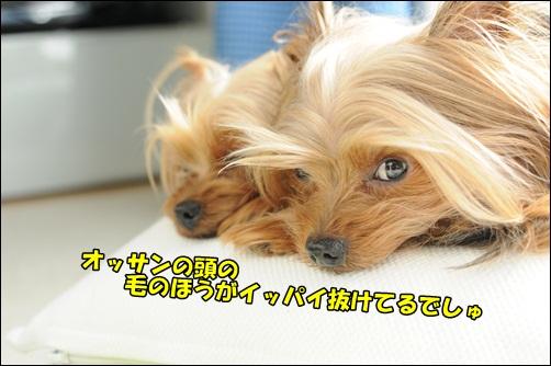 DSC_8753.jpg
