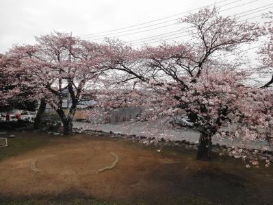 桜2010年 5