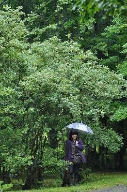 2010・07・06花鳥 090s-11