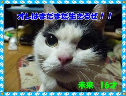 P1010380.jpg
