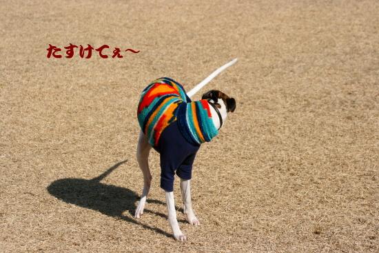 IMG_3224.jpg