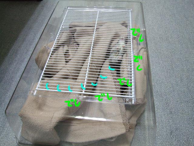 DSCF100529d5841.jpg