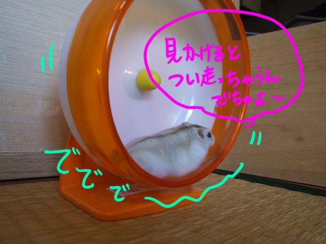 DSCF100628b4882.jpg