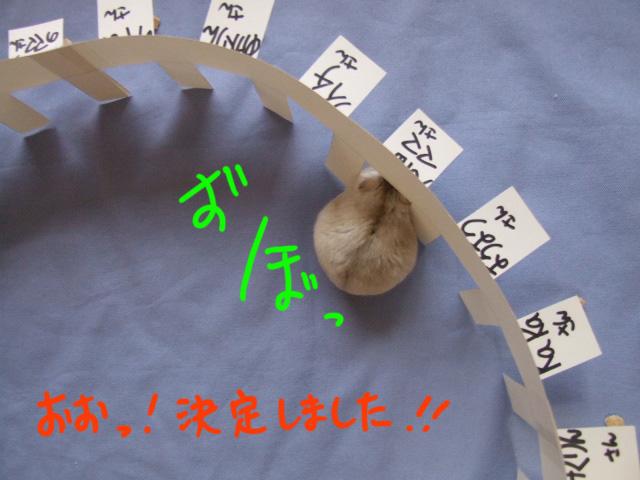 DSCF100930j8878.jpg