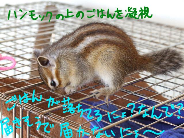DSCF101012c9220.jpg
