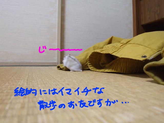 DSCF101220d4797.jpg