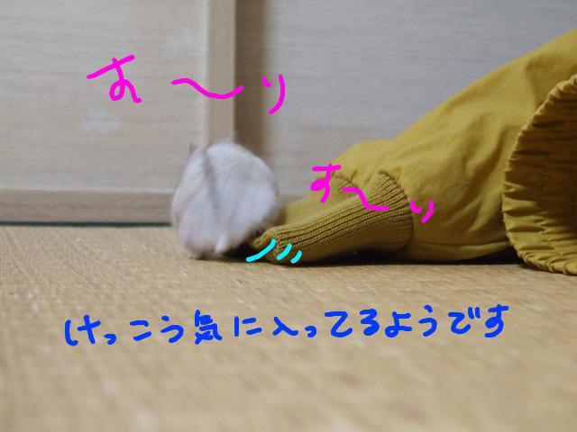 DSCF101220e4792.jpg