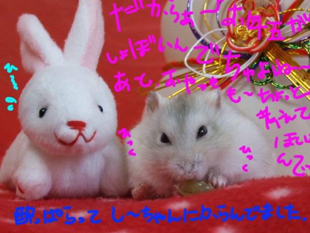 DSCF110101h9923_20110101080757.jpg