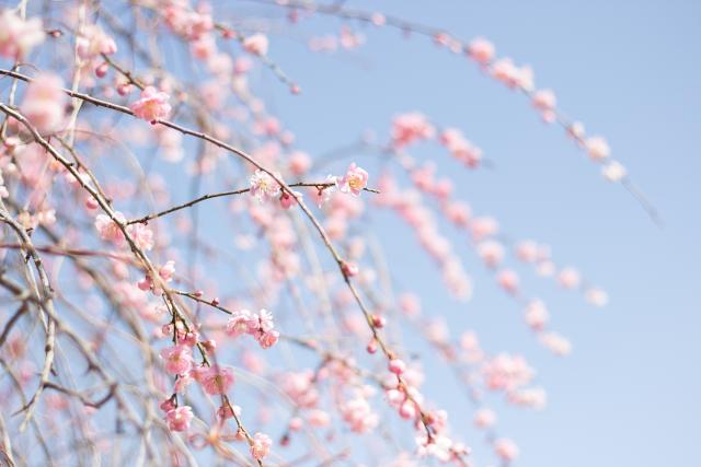 _MG_0266.jpg