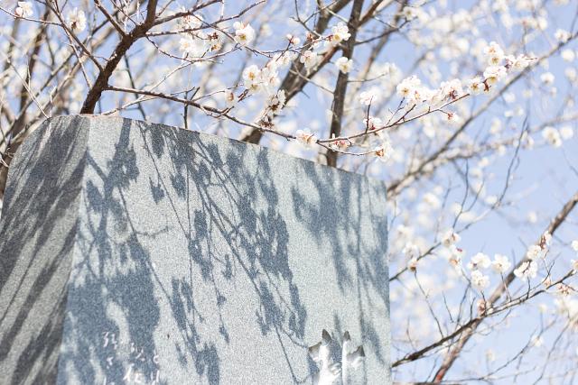 白梅は屈託なく咲き乱れる
