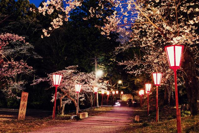 2013年 相馬神社の夜桜