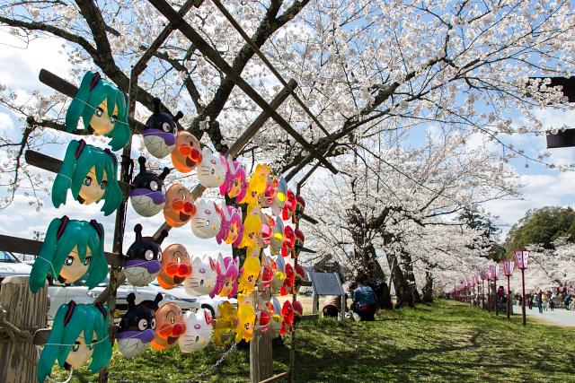 今年も盛大に咲きました、桜