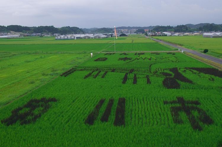 田んぼアート in 菊川