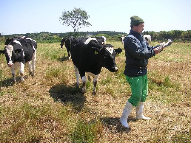 牛を見比べる