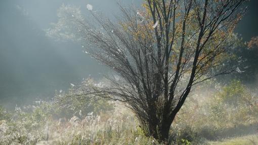 3506霧が谷1410811