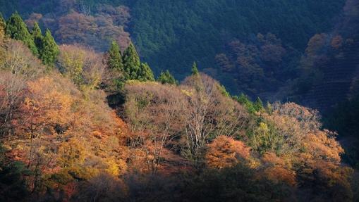 5052滝山峡14112210