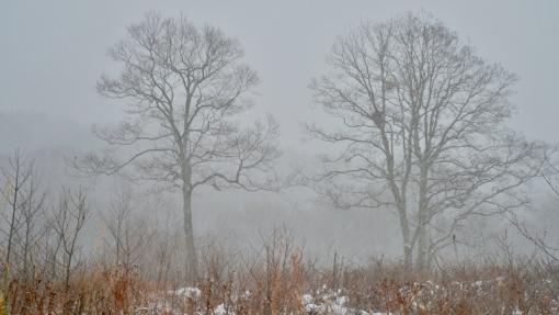 5187霧が谷141229