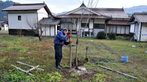 1325桜植樹141231
