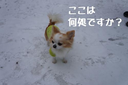 DSC03386_convert_20120212191644.jpg