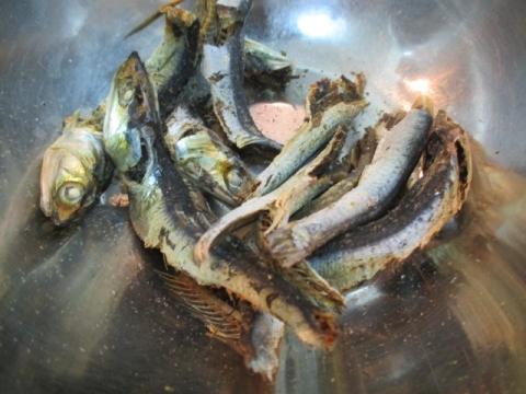 『麺や しき』で11月10日(日)に三周年記念限定「超濃厚純煮干しそば(仮称)」!-4