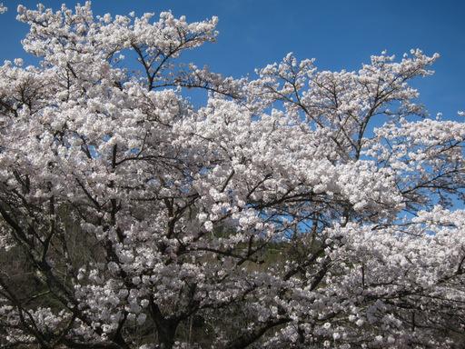 2012_春