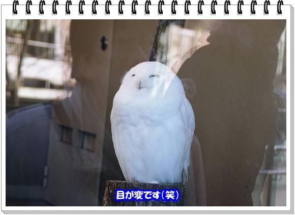 1415ブログNo11