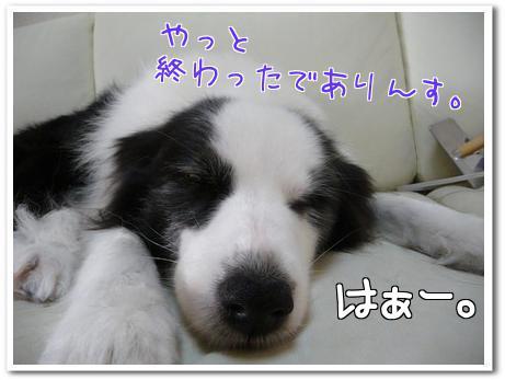 TMqM_.jpg