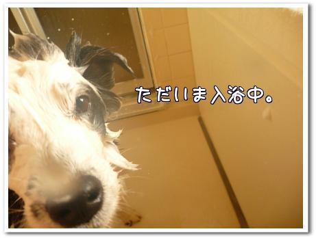 Z4Vha.jpg