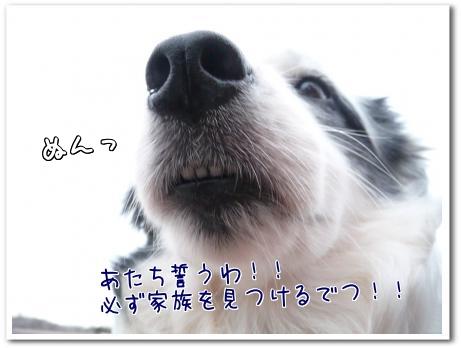 bdJtd_20111109112800.jpg