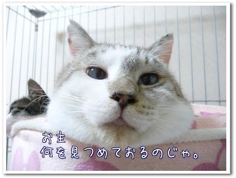 cTqi_.jpg