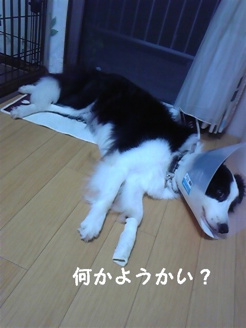 moblog_4e59f957.jpg