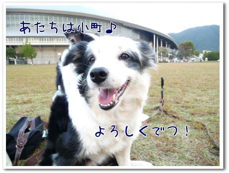 ofO_P.jpg