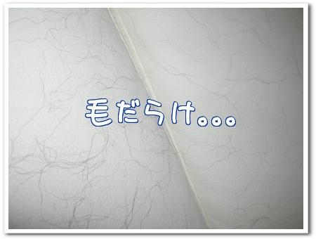 sPfI3.jpg