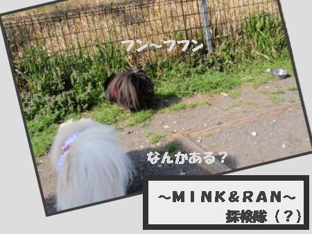 dog-run2