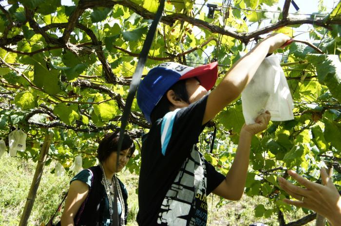 河野ぶどう園201103